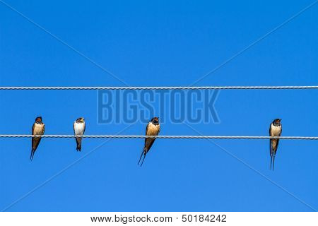 Four swallows sitting on a wire against blue sky background