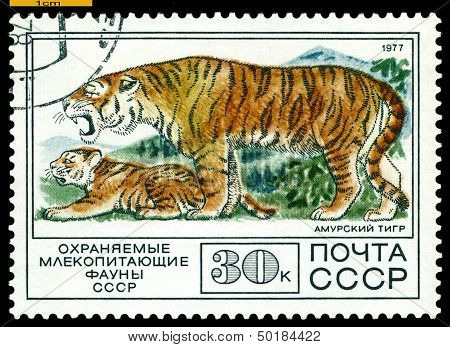 Vintage  Postage Stamp. Tiger And Cub.