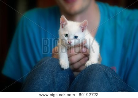 Kitten On A White Background Colored Hand
