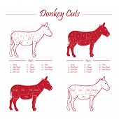 Illustration of Donkey meat cut scheme, full colour and linear red on white background poster
