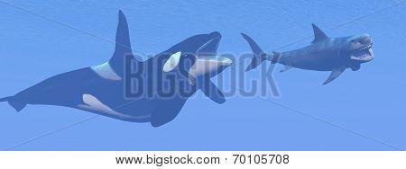 Killer whale attacking small megalodon shark - 3D render