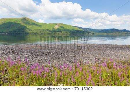 Lake District mountains and pink flowers Maiden Moor Derwent Water The Lakes National Park Cumbria south of Keswick poster