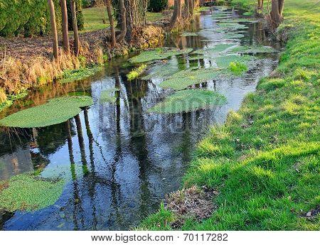 Wild Creek With Duckweed