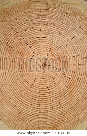 Tree Year Rings