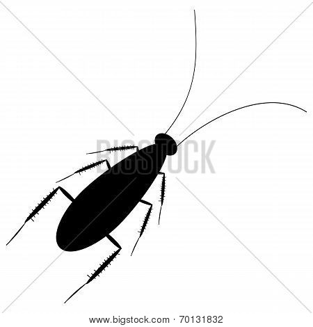 Cockroach Icon