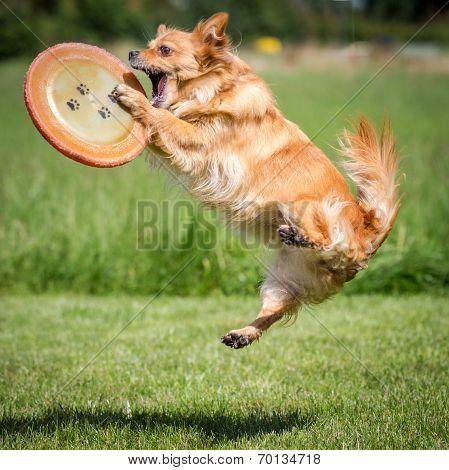 Caught Frisbee