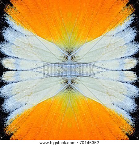 Beautiful Yellow and White butterfly wing skin texture in a nice background pattern
