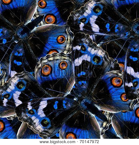 Blue Pansy Butterfly In The Greatest Blue Background Texture