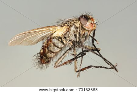 A Close Up Shot Of A Horse Fly