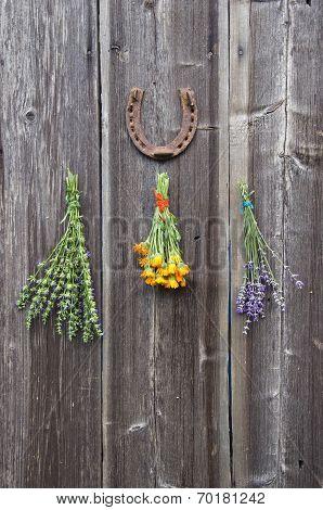 Fresh Medical Herbs Lavender, Marigold (calendula) And Hyssop (hyssopus Officinalis) On  Wall