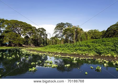 Wonderful landscape of coastline of lake Nicaragua