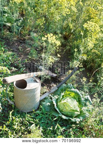 Shovel, Watering Can And Cabbage In Garden