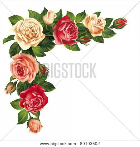 Roses garland isolated on white. Vector eps 10.
