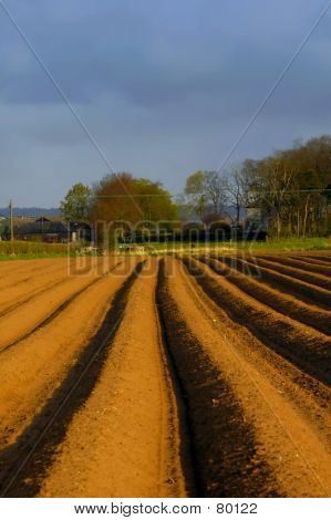 Furrows