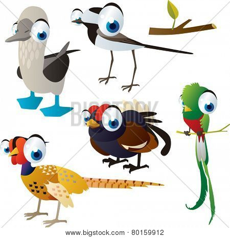 vector isolated cartoon cute animals set: birds: wildgrouse, booby, quetzal, pheasant, wagtail