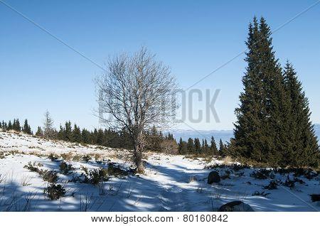 Winter scene with tree on snow