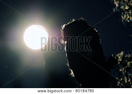 Boreal Owl Contour In Night
