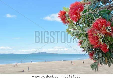 Pohutukawa Red Flowers Blossom In December