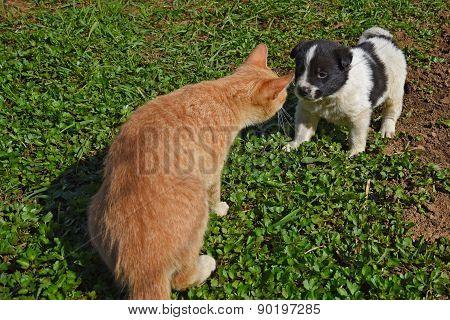 Puppy Dog Cat