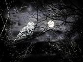 Halloween night theme with moon and owl against cloudy dark sky poster