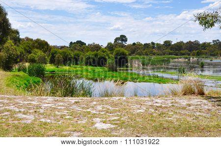 Beelier Wetlands: Nature's Green Landscape