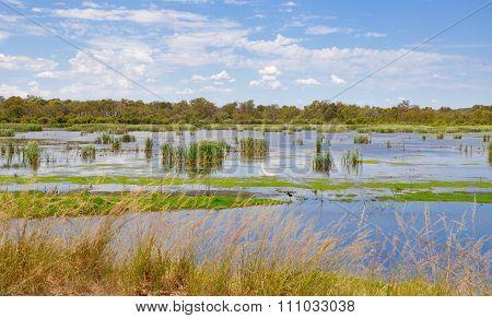 Beelier Wetlands Landscape