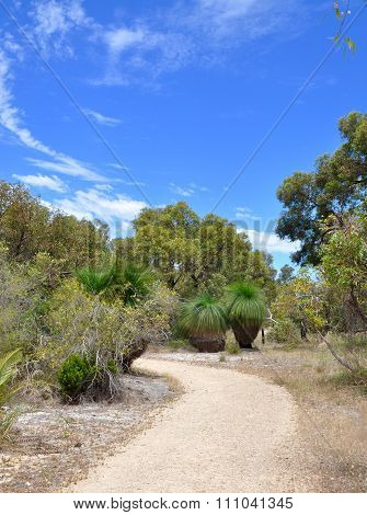 Tranquility: Path in the Bibra Lake Reserve