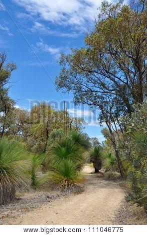 Bibra Lake Reserve: Bush Meditation Walk