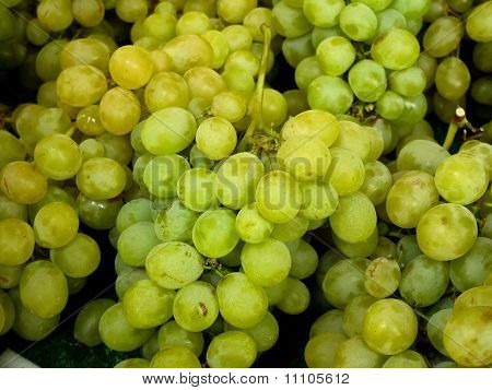 Fresh market grapes
