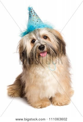 Cute Happy Bichon Havanese Puppy Dog In A Blue Party Hat