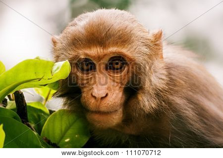 Wild Monkey With A Green Branch.