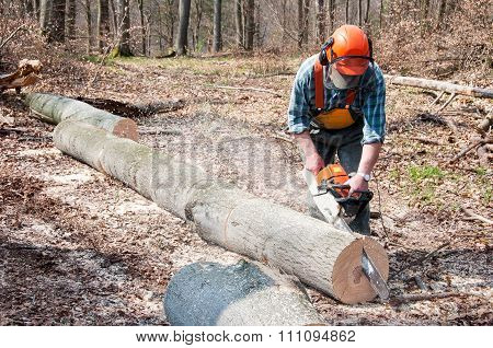 Lumberjack Cutting Tree