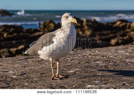 Gulls In The Harbor