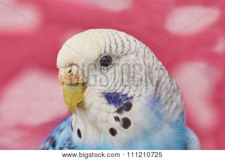 Wavy Parrot Girl