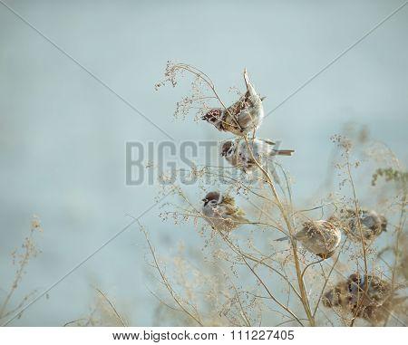 Sparrow Bird Sitting on Old Stick. Frozen Sparrow Bird Winter Po