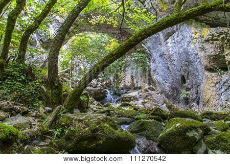 Trees And Rocks