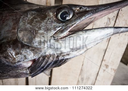 Head Of A Dead Swordfish