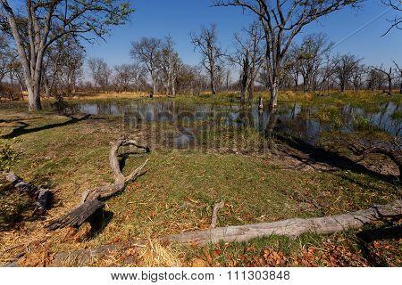 Moremi Game Reserve Landscape