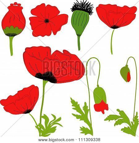 Separate elements flowers red poppy: flowers, leaves, bolls, buds on a transparent background