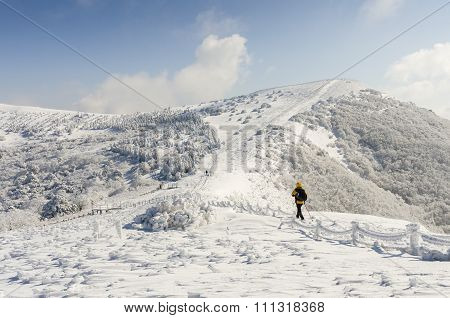 Winter White Snow Of Sobaeksan Mountain In Korea