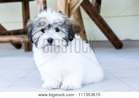 Cute white puppy dog