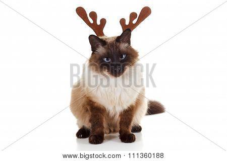 Funny Christmas Rudolph reindeer pet cat