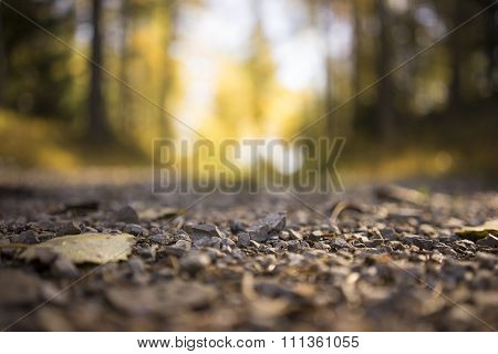 Gravel On Rural Country Road Through Forest