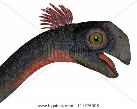 Gigantoraptor Dinosaur Head