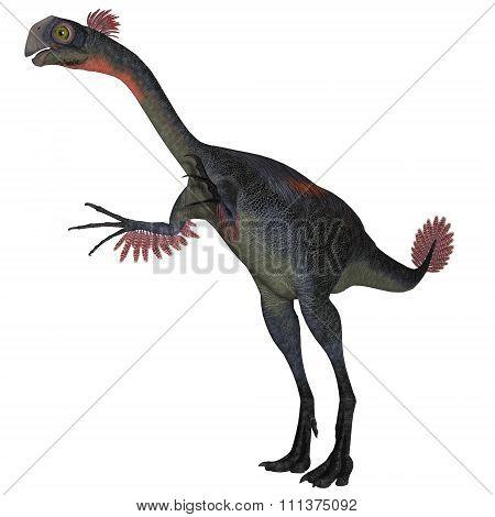 Gigantoraptor Dinosaur on White