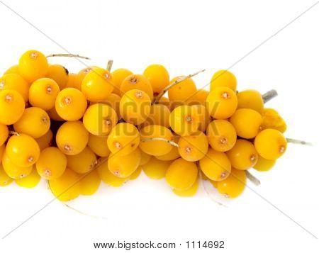 Branch Of A Berry Of Sea-Buckthorn Berries Frozen In A Deep-Freezer