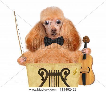 Dog violinist.