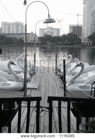 Swan Dock 1