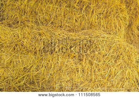 closeup dry grass