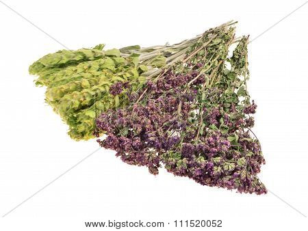 Bunch of dried oregano and mountain tea/Sideritis Scardica/ isolated on white background